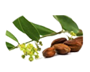 Jojoba oil helps to minimizing fine lines