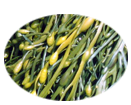 Sea weed extract nourishes