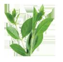 henna herb