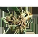 rubia herb